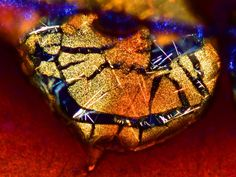 Judges for the Nikon Small World contest just deemed these 20 images the best microscope pictures of Espresso Coffee, Best Coffee, My Coffee, Macbook, Nikon Small World, Microscope Pictures, Smartphone, Microscopic Images, Best Espresso Machine