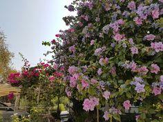 Garden in Bozburun