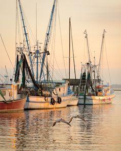 Shrimp Boats and Flying Pelicans, Shem Creek, Mt. Pleasant, SC via Hue and Eye Bass Fishing, Fishing Boats, Surf Fishing, Crappie Fishing, Fishing Reels, Hue, Sports Nautiques, Shrimp Boat, Boat Art