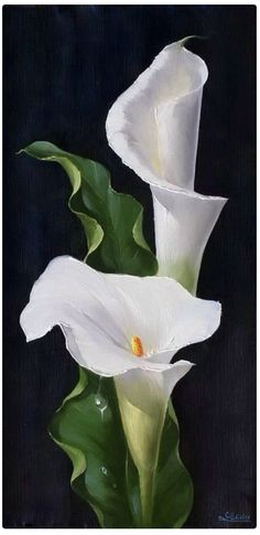 Wonderful Absolutely Free Calla Lily painting Thoughts Calla lilies will be the essential bridal bouquet flower. The actual lamps of this Africa bloom usua Lys Calla, Calla Lillies, Calla Lily Flowers, Lily Painting, China Painting, Watercolor Flowers, Watercolor Paintings, Watercolour, Arte Floral