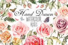 Hand drawn watercolor roses by knopazyzy on @creativemarket