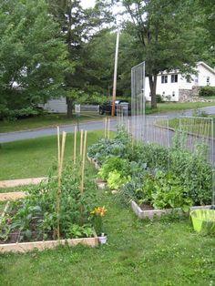 Square Foot Gardening Trellis