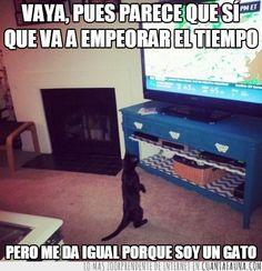 El gato preocupado por el tiempo... jajaja @anabelherrerago