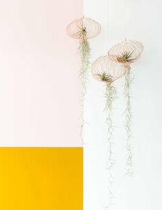Luchtplantjes bij Nicole en John uit aflevering 4, seizoen 4 | Weer verliefd op je huis | Make-over door: Wendy Verhaegh | Fotografie Barbara Kieboom