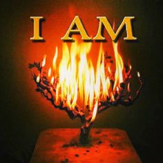 DEUS È BOM*****SANTO È O SENHOR.אנג'לו: Dia 241 - Antigo Testamento | The New Bible.com