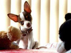 Love those ears!