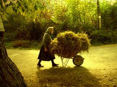 Autumn this reminds me of the hard work my Oma used to do in Germany getting in the hay for the rabbits in winter