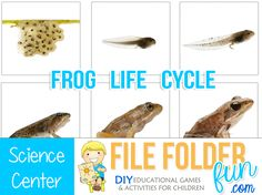 Real Photo Frog Life Cycle Sequencing Cards.  These are great for science centers.