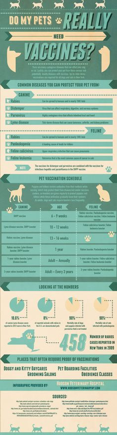 Do My Pets Really Need Vaccinations? - infographic