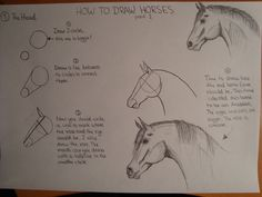 How to draw a horse (Part 1)