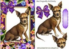 Gorgeous Little Chihuahua In Flower Frame With Bow