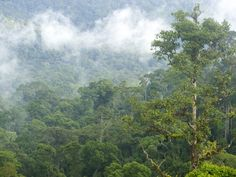 Borneo Has Lost 30 Percent of Its Forest in the Past 40 Years   Smart News   Smithsonian