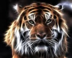 fractales animales