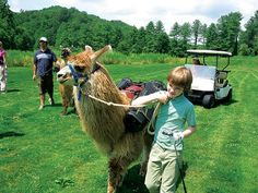 Big black eyes… long eyelashes… six feet tall… banana-shaped ears… weighs 375 pounds. Yes, that golf caddy isn't a young man – it's a llama. Big Black, Llamas, Golf, Activities, Animals, Animaux, Animal, Animales, Wave