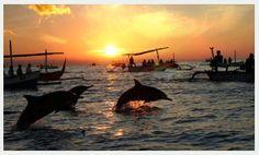 In kustplaats Lovina kun je in een bootje stappen om dolfijnen te spotten.