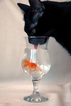 Gourmet water