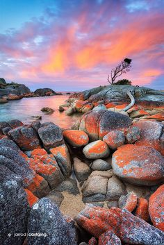 Orange granite accents the Bay of Fires in Tasmania, Australia.