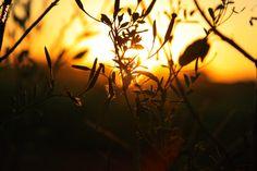 """http://olharesdoavesso.blogspot.com.br/2015/05/producao-seriada.html """"...não há cortinas só esforço nem evasiva privacidade a insegurança é a violência do apodrecimento da verdade..."""" """"... there is no curtains only effort or evasive privacy insecurity is the violence of the decay of the truth ... """" #poesia #apodrecer #poetry #rot #Gedicht #诗歌 #腐烂 #podredumbre #poésie #pourriture #कविता #सड़ांध #поэзия #гниль #pôrdosol #ocaso #sunset #sundown #sinking #west"""
