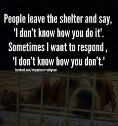 Volunteer at Gimme Animal Shelter by bathing animals, walking dogs, socializing, cleaning kennels, and assisting with medications.