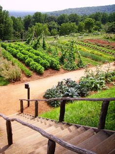 early colonial garden - Steps down to the Vegetable Garden - Thomas Jefferson's Monticello