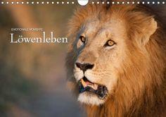 Mein Kalender des Tages, passend zum Poster des Tages:   Emotionale Momente: Löwenleben