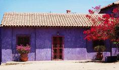 purple house - Todos los Santos