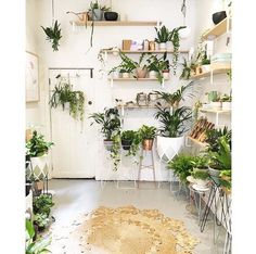 Living Room Decoration With Plants Ideas You'll Like; Living Room Decoration With Plants; Plants In Living Room; Living Room With Plants Deocr; Small Indoor Plants, Indoor Ferns, Sweet Home, Plant Table, Decoration Plante, Home Decoration, Garden Decorations, Idee Diy, Container Gardening