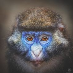 Project Square: Apes XXXIV by Manuela Kulpa on 500px