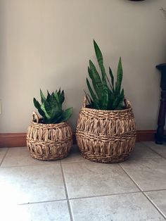 Snake plant in baskets from Target
