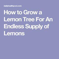 How to Grow a Lemon Tree For An Endless Supply of Lemons