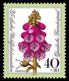 Fingerhut, Foxglove, series flowers. Germany 1974.