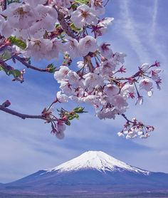 Cherry Blossoms and Mt Fuji Beautiful Nature Pictures, Amazing Nature, Beautiful Landscapes, Monte Fuji Japon, Japanese Nature, Japanese Landscape, Fuji Mountain, Sakura Cherry Blossom, Cherry Blossoms