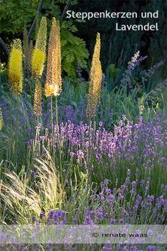 Garten-mediterran_Lavendel