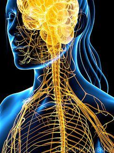 Nervous system, artwork
