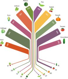 Infographic: Center for Food Safety. Variety of seeds available 1903 vs 1983 (and you know its much smaller now).