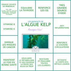 Les Bienfaits de l'algue Kelp | LA KELP Le Monde s'Eveille Grâce à Nous Tous ♥