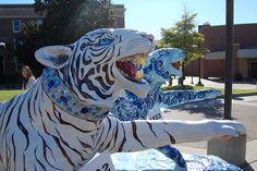 http://www.flickr.com/photos/alumniassociation/sets/72157627672160750/  University of Memphis, 100 Tigers