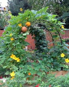 88 Fabulous Backyard Vegetable Garden Design Ideas If you're wanting fresh vegetables this year, you might be wondering how to layout a vegetable garden. Vertical Vegetable Gardens, Vegetable Garden Planner, Vegetable Garden For Beginners, Backyard Vegetable Gardens, Vegetable Garden Design, Diy Garden, Gardening For Beginners, Garden Beds, Gardening Tips