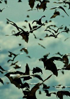 bats | ben van den brink.