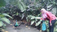 Bali Bird Park, Bali ( ^)o(^ )