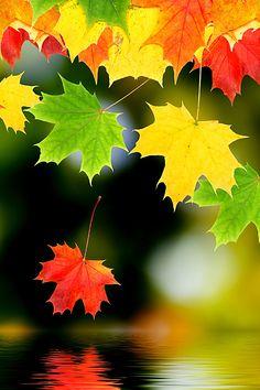 Autumn Leaf Wallpaper. #leafs #fall #autumn #iphone #wallpaper