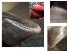 Pete Ramey Barefoot Trim | Click onabove photo to go to slideshow of hooves and consults.