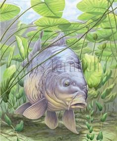 604 453 carp for Carp pond design