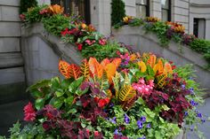 But whether you usually plant a whole tree pit with impatiens or only use a few , as in the planters above, a change might be in order.