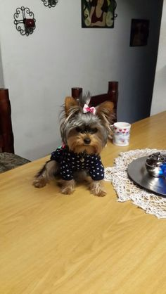 Gorgeous doggy in a gorgeous doggy outfit! Enter your pet to win a share of R101 000! #SouthAfrica only. #Pet competition. mymostbeautiful.com/