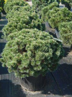 immergr ne pflanzen sind pflegeleicht und sch n garten 5 pflanzen pinterest immergr n. Black Bedroom Furniture Sets. Home Design Ideas