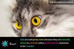 #animals #cats #facts