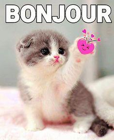 Coeur Gif, Ferret, Cats, Animals, Bonjour, Gatos, Animales, Animaux, Ferrets