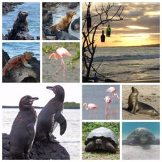 Lynne Morley (@Lynne_Jean) | Twitter Galápagos Islands are the most fascinating place - more info here :- http://lynnemorley.blogspot.com/2015/08/galapagos-islands-