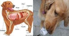 La dieta geneticamente corretta per il tuo cane: 30 cibi super salutari e 12 da evitare